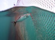 Interview with Mert Gökalp on Bluefish Documentary part:1