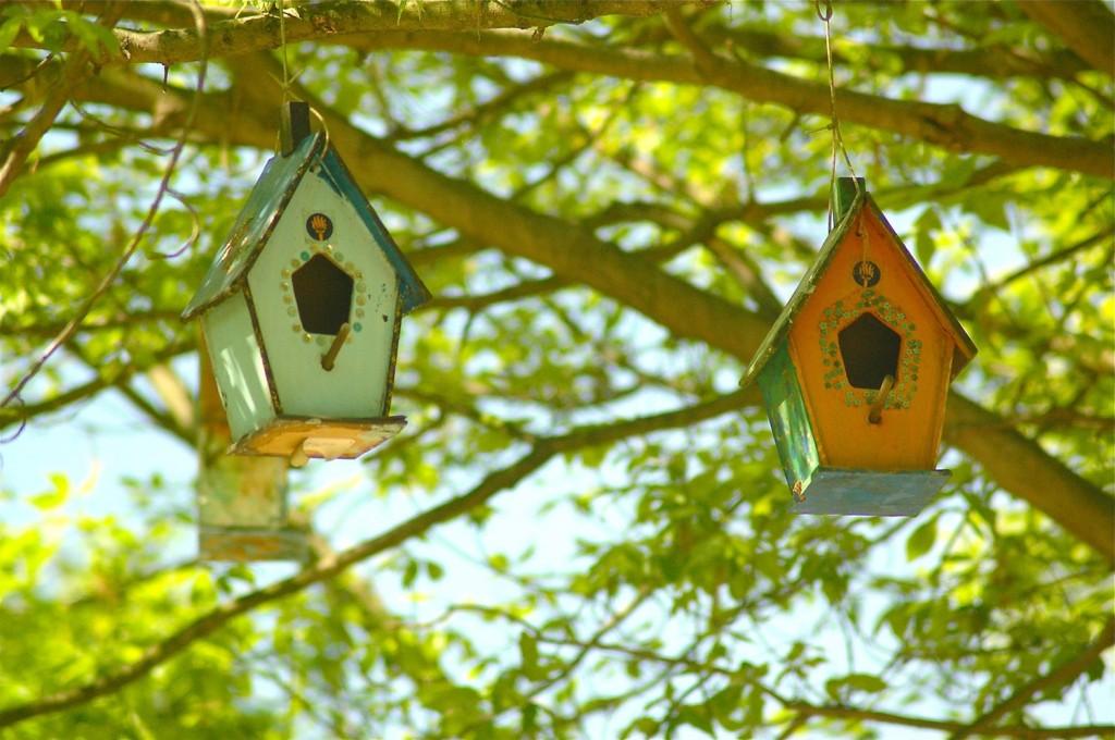 mackaparkbirdhouses5