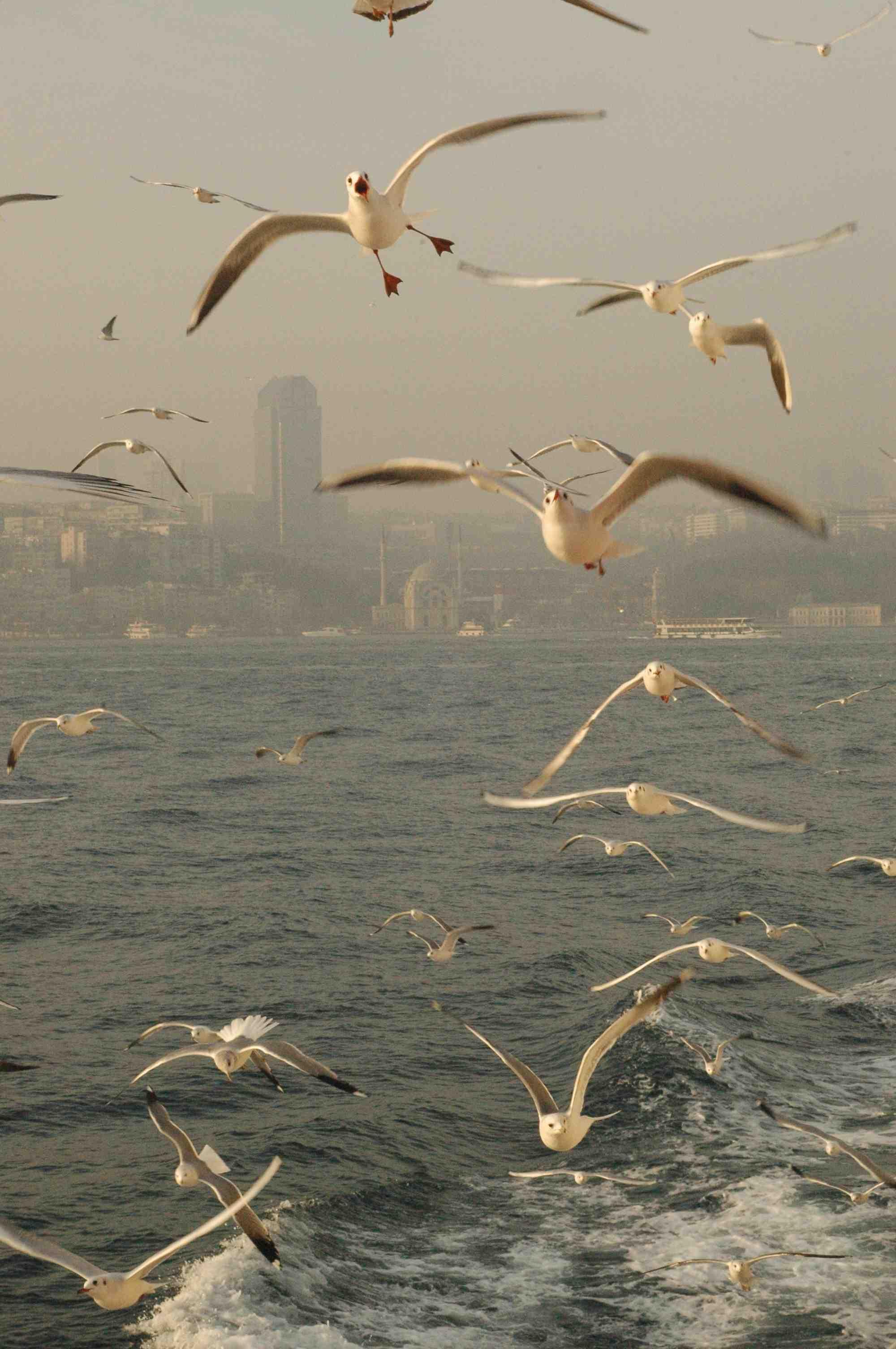 seagulls2