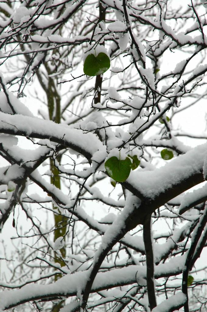 snowbu7